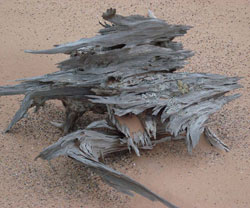 Ghost Forest Log