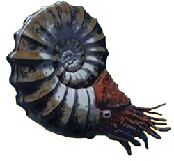 Ammonite Reconstructed